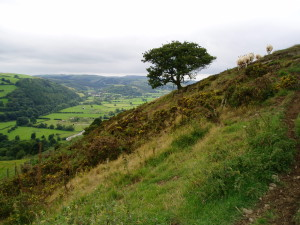 Offa's Dyke Path near Knighton